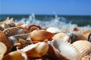 Seashells On Beach - Obrázkek zdarma pro 1152x864