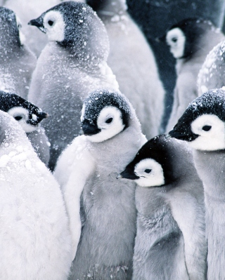 Frozen Penguins - Obrázkek zdarma pro Nokia X1-00
