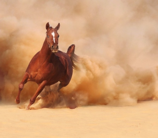 Horse Running Free And Fast - Obrázkek zdarma pro 128x128