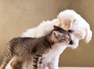 Dog Cat Love Background for Android, iPhone and iPad