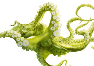 Green Octopus - Obrázkek zdarma pro 1600x1280