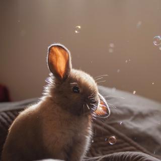 Grey cutest bunny - Obrázkek zdarma pro iPad Air