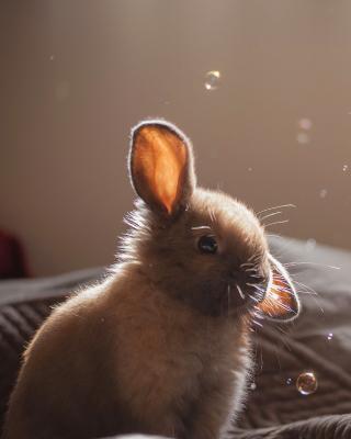 Grey cutest bunny - Obrázkek zdarma pro Nokia Lumia 625