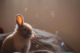Grey cutest bunny - Obrázkek zdarma pro 480x320