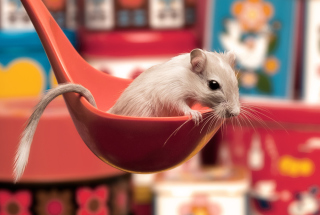 Cute Rat Background for Android, iPhone and iPad