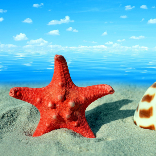 Seashell and Starfish - Obrázkek zdarma pro iPad