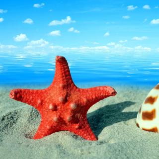 Seashell and Starfish - Obrázkek zdarma pro iPad mini