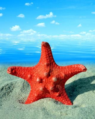 Seashell and Starfish - Obrázkek zdarma pro Nokia Asha 503