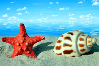 Seashell and Starfish Background for Android, iPhone and iPad