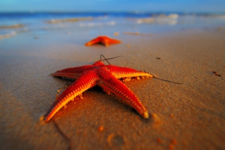 Seastar - Obrázkek zdarma pro Samsung Galaxy A