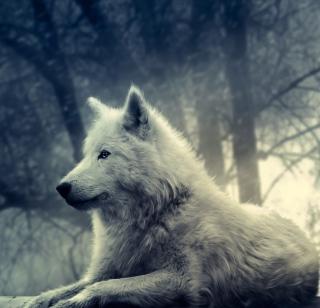 Night Wolf - Obrázkek zdarma pro iPad