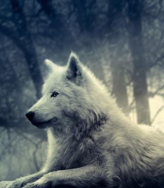 Night Wolf - Obrázkek zdarma pro 480x640