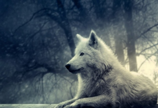 Night Wolf Picture for Android, iPhone and iPad
