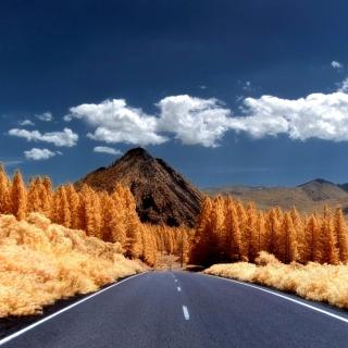 Autumn Road - Obrázkek zdarma pro iPad