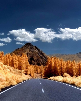 Autumn Road - Fondos de pantalla gratis para LG T325 Cookie