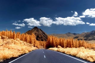 Free Autumn Road Picture for Android, iPhone and iPad