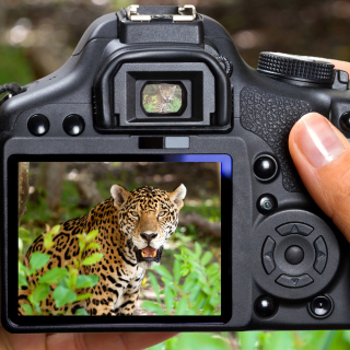 Jungle Spotting - Obrázkek zdarma pro iPad mini