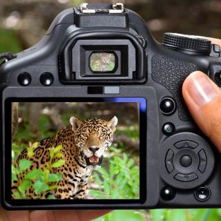 Jungle Spotting - Obrázkek zdarma pro iPad 3