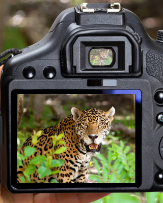 Jungle Spotting - Obrázkek zdarma pro iPhone 4S