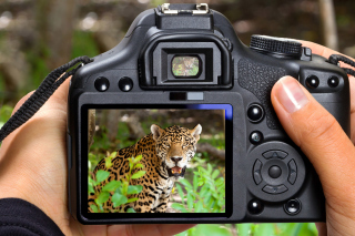 Jungle Spotting Wallpaper for Android, iPhone and iPad