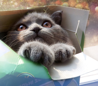 Grey Baby Cat In Box - Obrázkek zdarma pro 128x128
