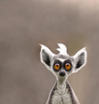 Cute Lemur - Obrázkek zdarma pro iPad