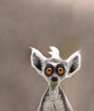 Cute Lemur - Obrázkek zdarma pro 240x432