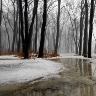 Winter is Coming - Obrázkek zdarma pro 128x128