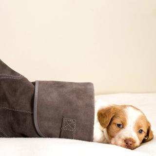 Puppy in Boot - Obrázkek zdarma pro 208x208
