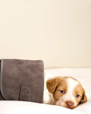 Puppy in Boot - Obrázkek zdarma pro Nokia C1-01