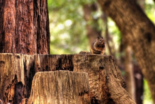 Fat Squirrel Background for Android, iPhone and iPad