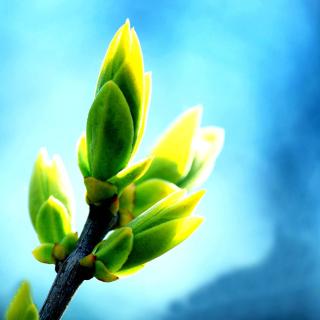 Spring Bud - Obrázkek zdarma pro iPad mini 2