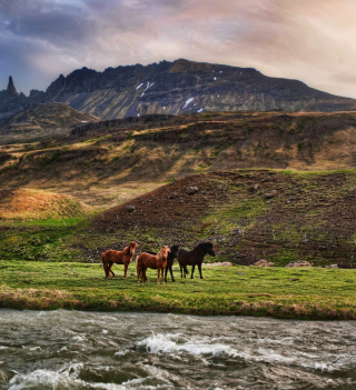 Landscape In Iceland And Horses - Obrázkek zdarma pro 128x128