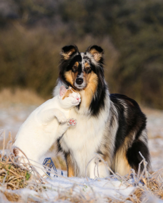 Friendship Cat and Dog Collie - Obrázkek zdarma pro 480x854