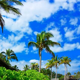 Kenya Diani Beach - Obrázkek zdarma pro iPad 2