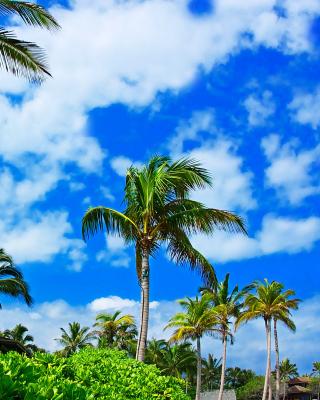 Kenya Diani Beach - Obrázkek zdarma pro Nokia Lumia 720