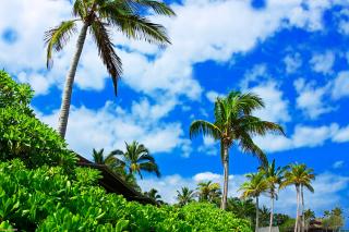 Kenya Diani Beach - Obrázkek zdarma pro 1024x600