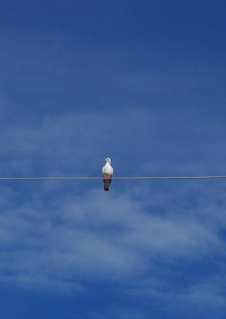 Bird On Wire - Obrázkek zdarma pro 128x160