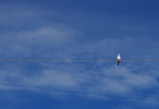 Bird On Wire - Obrázkek zdarma pro Widescreen Desktop PC 1920x1080 Full HD