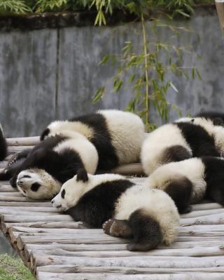 Funny Pandas Relaxing - Obrázkek zdarma pro 176x220