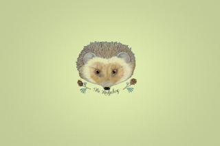 Hedgehog Picture for Android, iPhone and iPad