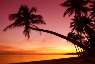 Crimson Sunset - Obrázkek zdarma pro HTC Wildfire