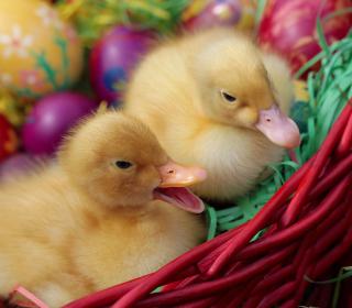 Yellow Duckling - Obrázkek zdarma pro 1024x1024