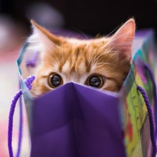 Ginger Cat Hiding In Gift Bag - Obrázkek zdarma pro iPad mini 2