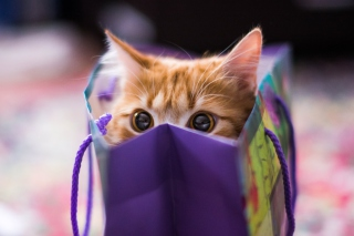 Ginger Cat Hiding In Gift Bag - Obrázkek zdarma pro Android 800x1280