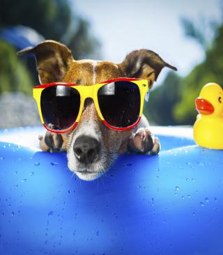 Relax Dog - Obrázkek zdarma pro Nokia Asha 300