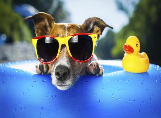 Relax Dog - Obrázkek zdarma pro Samsung Galaxy Tab 4G LTE