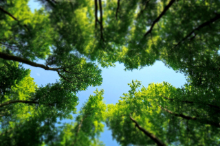 Under the Trees Background for Android, iPhone and iPad