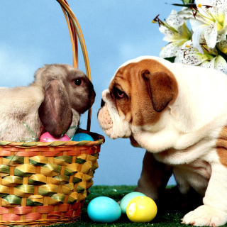 Easter Dog and Rabbit - Obrázkek zdarma pro 208x208