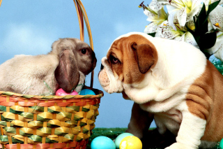 Easter Dog and Rabbit - Obrázkek zdarma pro Widescreen Desktop PC 1600x900